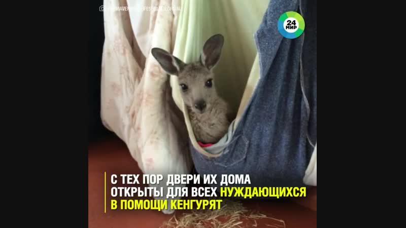 Приют для кенгурят