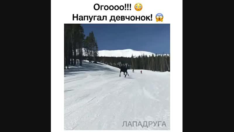 Вот это да! 😳 Катишь себе спокойно на сноуборде, а тут лось догоняет!