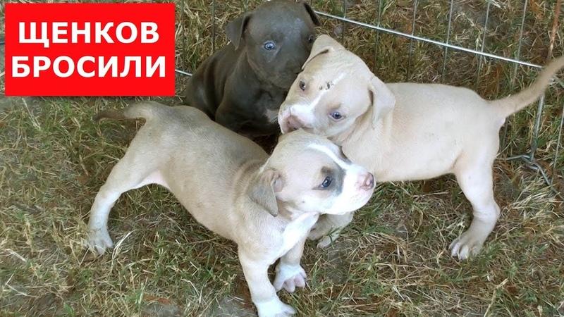 Спасли новорожденных щенят.Хозяин отказался от них.Ветеринарное ранчо