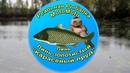 Как поймать Линя и Золотистого линя на Карасёвом пруду Реальная Рыбалка