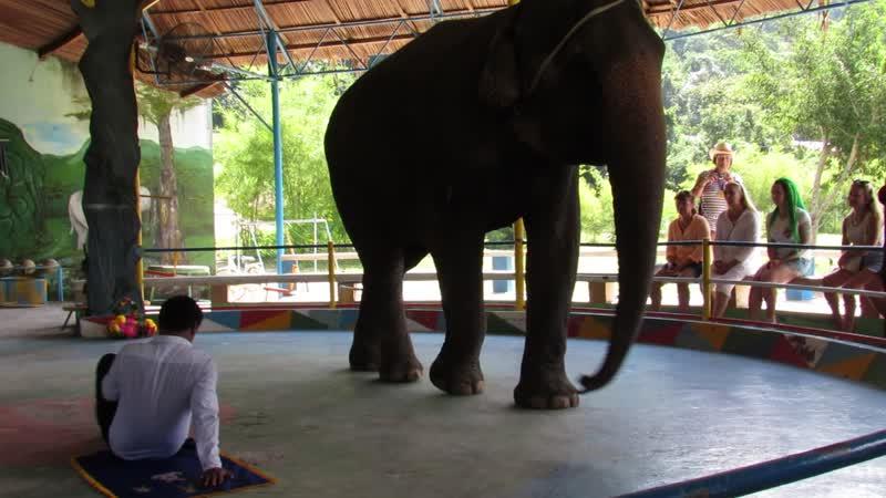 слоник перешагнул вьетнамца