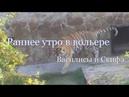 Раннее уторо в вольере Василисы и Скифа