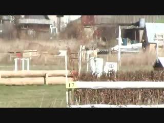 Horse for sale (Тракененский Жеребец от Безансона)