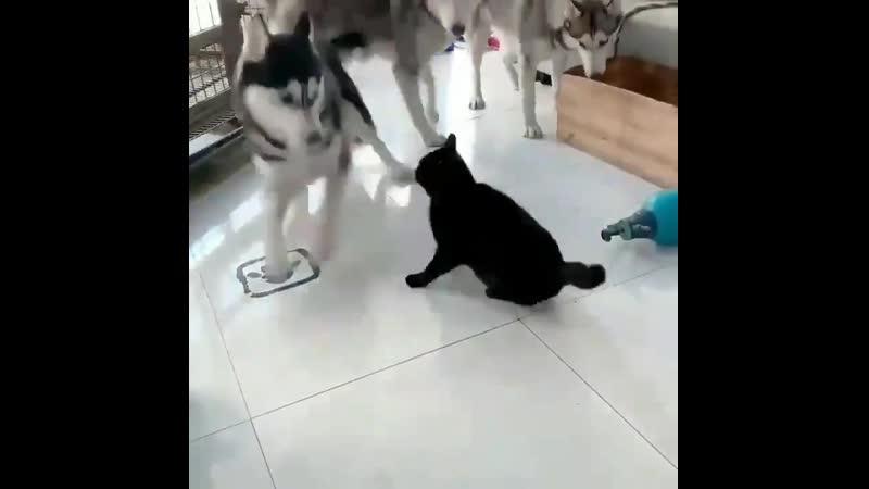 Котэ и собакены