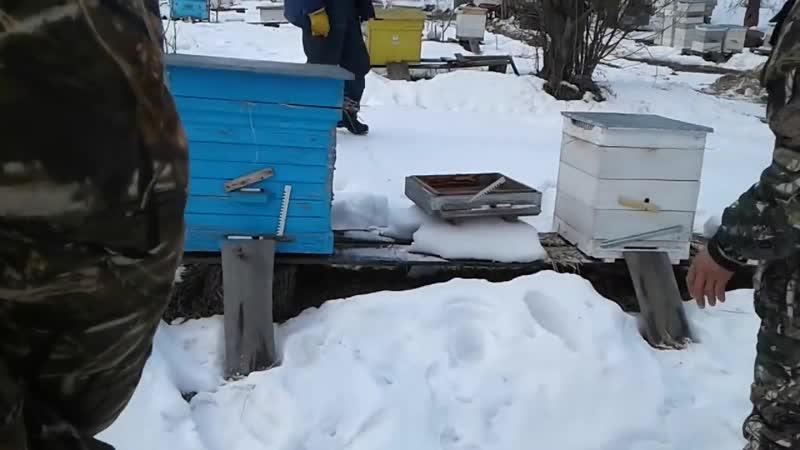 С началом пчеловодного сезона