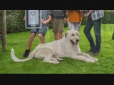 Dog with the longest tail - Guinness World Records