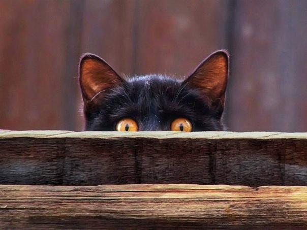 ПИРОГ С ЦАПУСТОЙ Кота, как с ними часто бывает, погубило любопытство. Сероглазая личинка человека почти с самого рождения выражала в адрес животного неумеренные восторги. Дрыгала ножками,