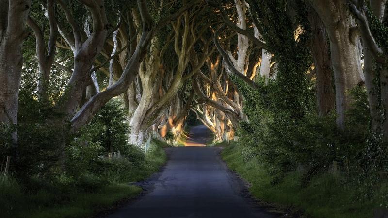 Картинка природа. Ветки, дорога, деревья | Picture nature. Branches, road, trees