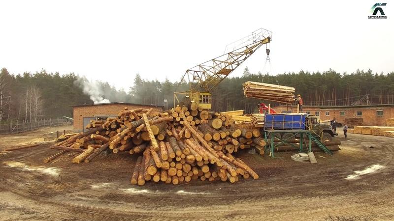 Гутянське лісове господарство-Берегите природу!