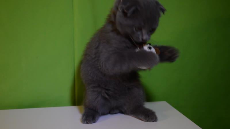 Как правильно кормить кота/ЛАЙФХАК