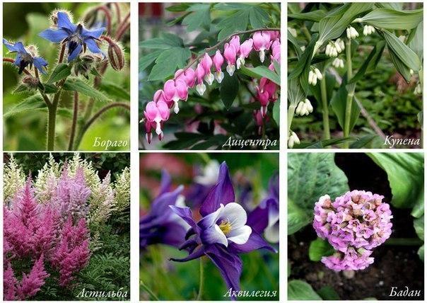 Растения, которые прекрасно растут в тени!