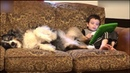 Amusing clip sees a kid use his dog's paw to play a game on a tablet