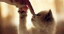 Любите, жалейте собак, кошек, других животных. Это путь Спасения, очищения души.