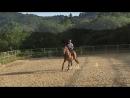Продам лошадь выездковую