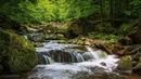 Relax 30 минут. Шум ручья в лесу, пение птиц. Расслабляющие звуки воды