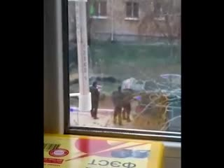 Депутат Госдумы открыл огонь из автомата во дворе жилого дома