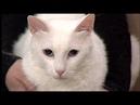 Roza Vostoka в гостях Утреннего кофе с котом Ичи.