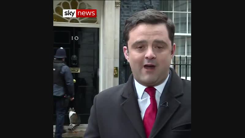 Someone seems a bit fed up with the Brexit fallout. - - Look who stole the show from @RaynerSkyNews steering the focus away from