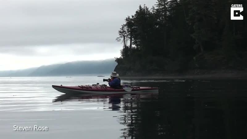Невероятно близкая встреча каякеров с двумя китами-убийцами на острове Ванкувер, Британская Колумбия. Касатки охотились на лосос