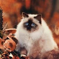 Аватар Анны Абузаровой