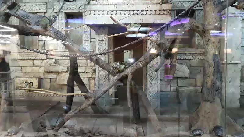 Москва,МКАД,Осташковское ш. Магазин Планета железяк маленькие обезьянки.