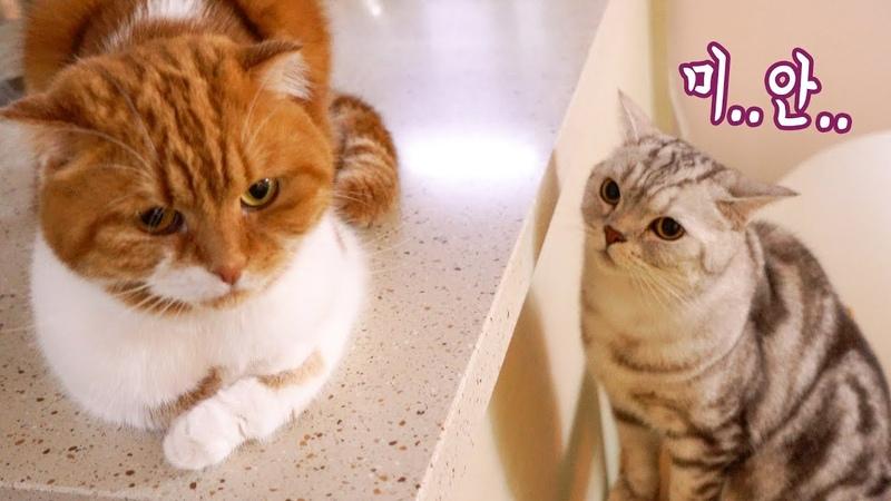 싸우고 나서 아빠에게 사과하는 고양이 _ 노을49548울