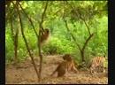 На-на-на (VHS Video)