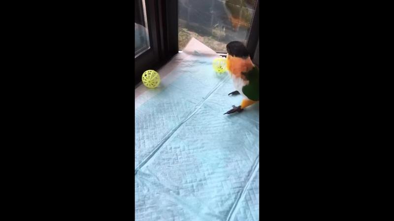 Bird ball ricochet