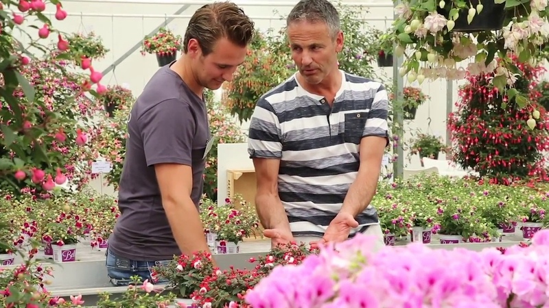 Hendriks Young Plants Flower Trials 2017