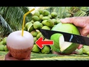 Amazing coconut cutting skills Drinking coconut How to cut open toddy palm eating fruit