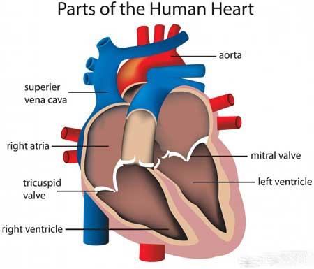 Люди с сердечными заболеваниями должны избегать прокаина