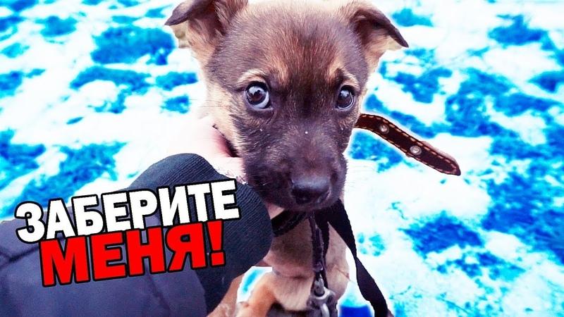 Спасение щенка. Собачка ищет дом SANI vlog