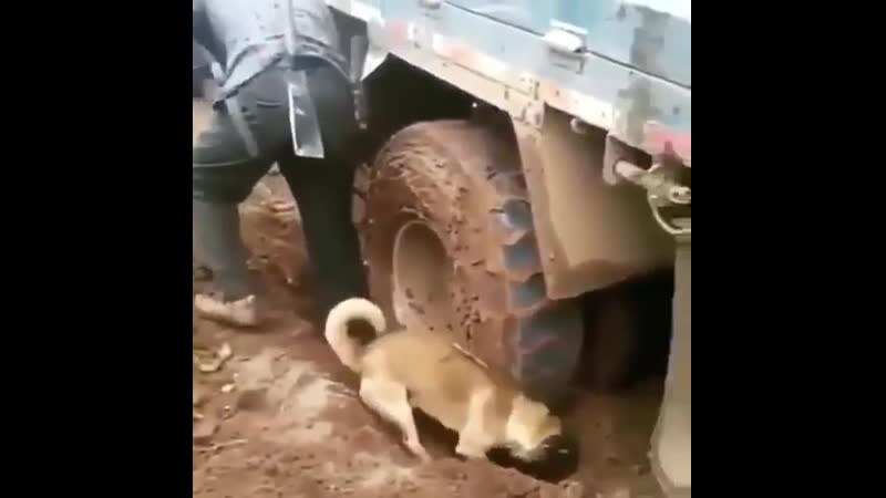 Помощник