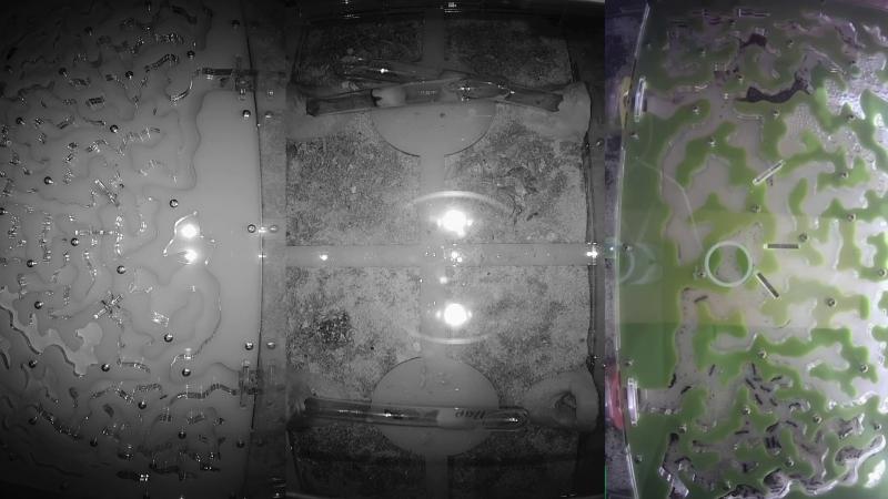 LIVE x1 Ant Wars Муравьиная ферма ResOfAnts Муравьи LIVE x1 смотреть онлайн без регистрации