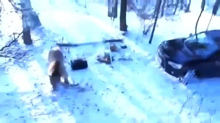 Медведь напал на рыбаков в башкирии конец вас просто шокирует.