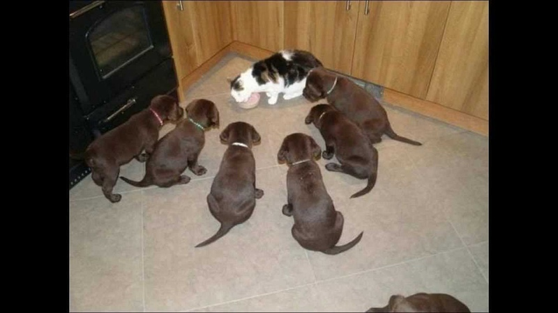 ПОПРОБУЙ НЕ ЗАСМЕЯТЬСЯ - Смешные Приколы и фейлы с Животными до слез, смешные коты 86