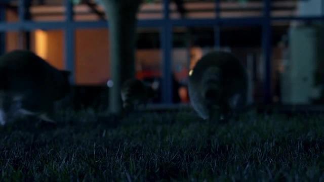 Aligator Decaville Put Your Lights Up (Alastor Uchiha 2019 remix)