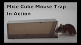 Mice Cube Mouse Trap In Action. The World's Simplest Live Catch Mouse Trap