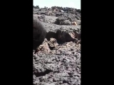 S. Syria excerpt from battle on front of Safa Volcanic Field E. of Suweida where ISIS snipers are the biggest threat. Video shot