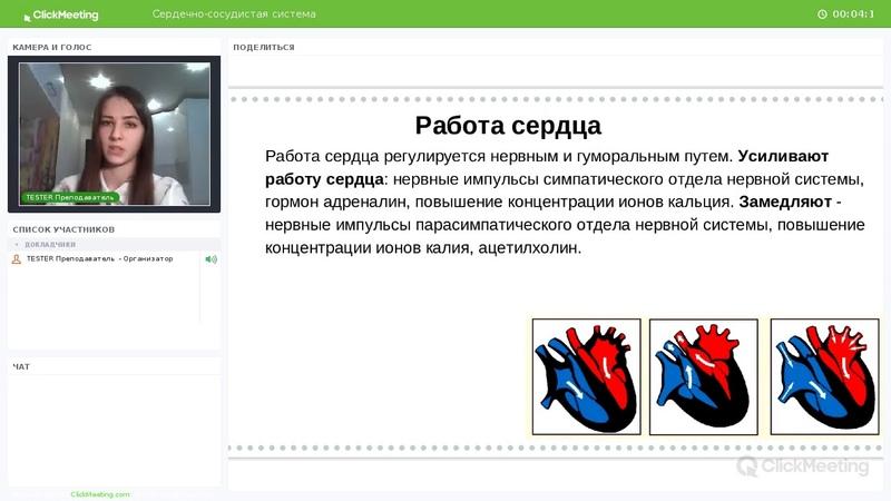 Биология   Мини-урок   Сердечно-сосудистая система   Testеr
