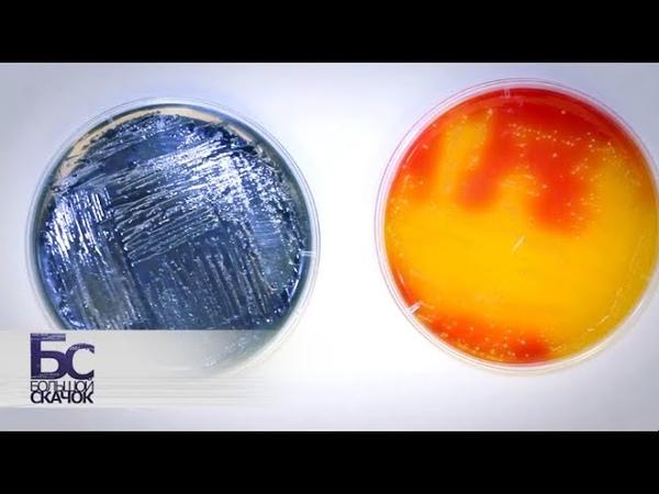 Экстремофилы - микроорганизмы живущие при температуре 150°C, во льдах, в толще базальта, серной кислоте и радиоактивных могильниках