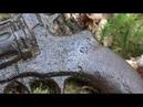 Нашли Наган и другое оружие у немецких блиндажей раскопки с металлоискателем