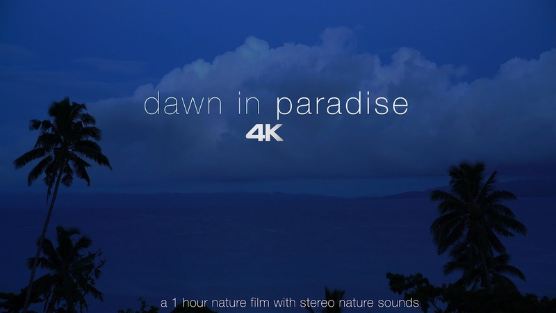 Dawn in Paradise Ambient Sounds from a Tropical Island 4K Nature Video for Relaxation 1 HR UHD