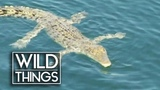 Crocodiles vs Sharks Which is More Dangerous Wild Things Shorts