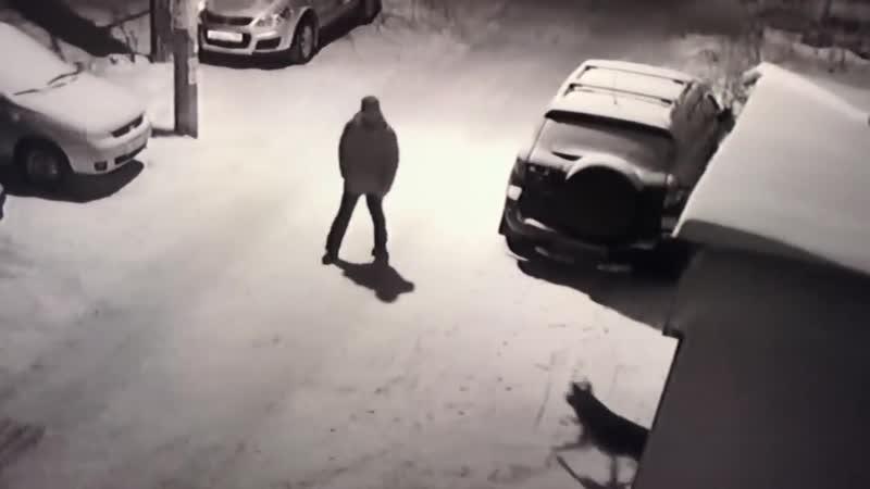Человек напал на собаку