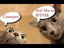 Приколы с котами с ОЗВУЧКОЙ – СМЕШНЫЕ животные – ПОПРОБУЙ НЕ ЗАСМЕЯТЬСЯ - Domi Show