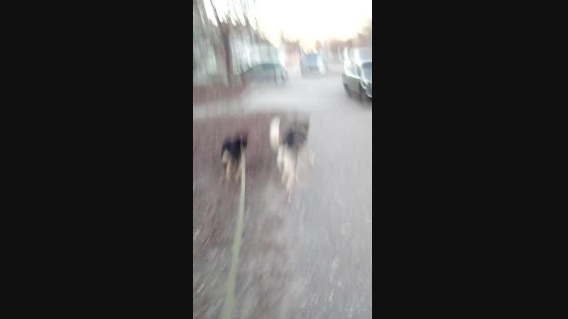иду дамой с собакой