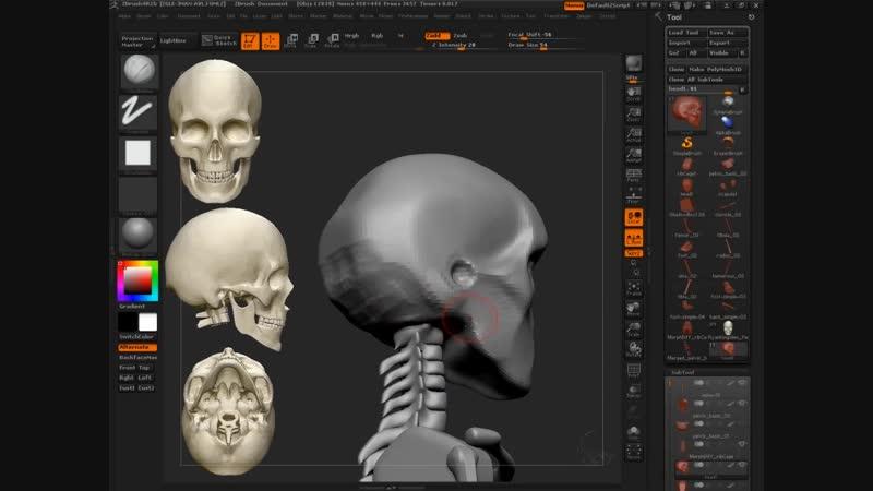 23 Skull