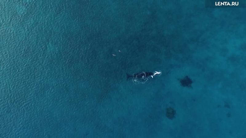 Прокатилась на пузе у китёнка