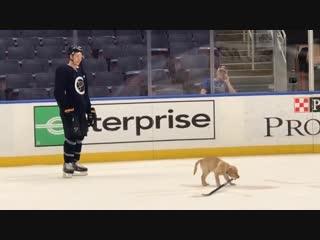 Щенок  талисман команды НХЛ Сент-Луис Блюз